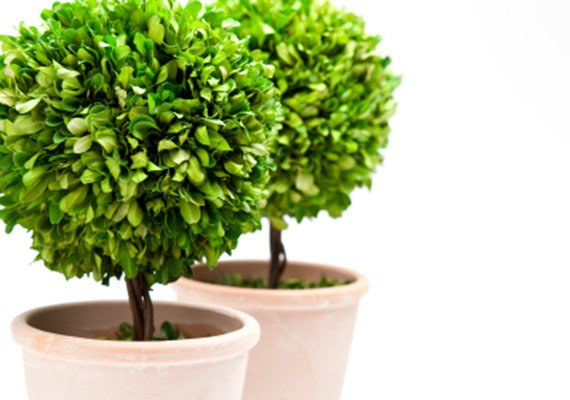 Assortimento mebo flor giardineria giardineria bozen for Alberelli da vaso per esterno